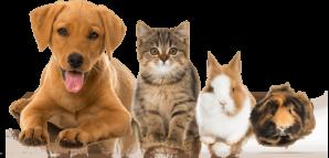 Ветеринарная клиника с удобным сервисом