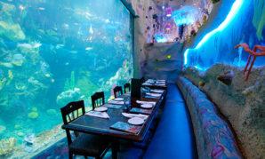 Большой аквариум в Денвере — увлечение для всей семьи