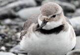 Птица-кривонос