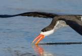 Птица-водорез